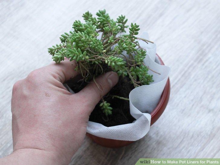 Stellen Sie Ihre Pflanze in den Boden.