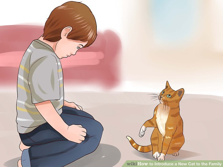 How to Introduce a New Cat to the Family - Practical Information