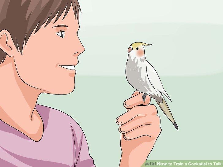 Verbinde dich zuerst mit dem Vogel.