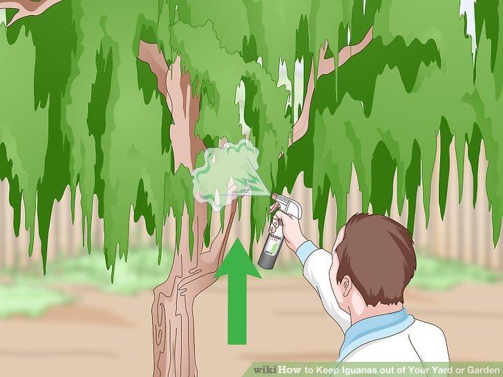 Spray-Repellent in Gebieten, in denen Leguane am häufigsten vorkommen.