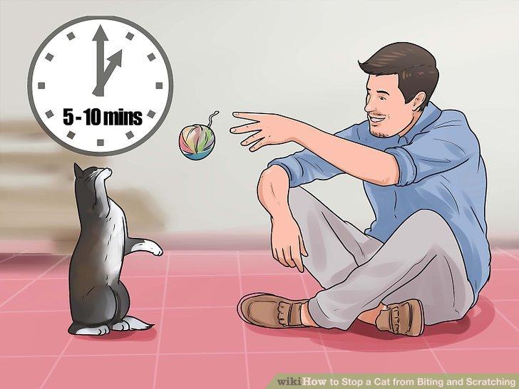 Lassen Sie Ihre Katze viel Spielzeit haben.