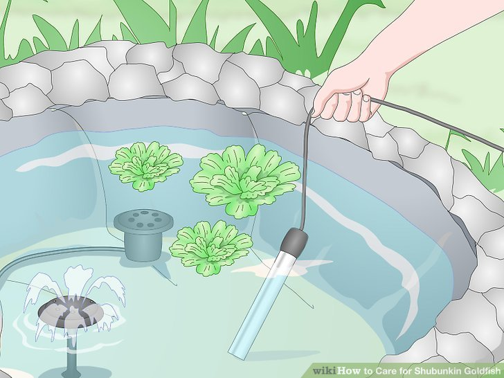 Legen Sie fischsichere Pflanzen in Ihren Teich.