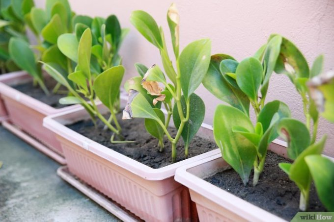 Save an Overwatered Plant Step 6.jpg
