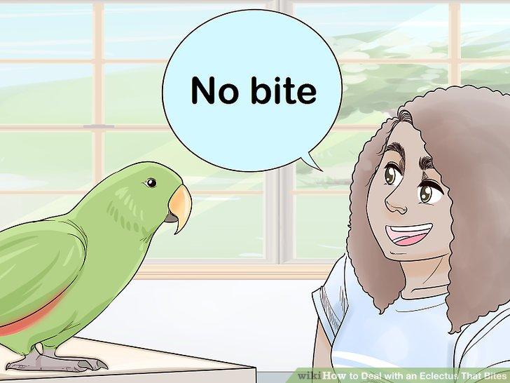 Sprechen Sie mit einer festen Stimme, wenn Sie versuchen, das Verhalten Ihres Vogels zu korrigieren.