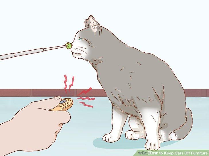 Sopa takip etmek için kedi öğretin.