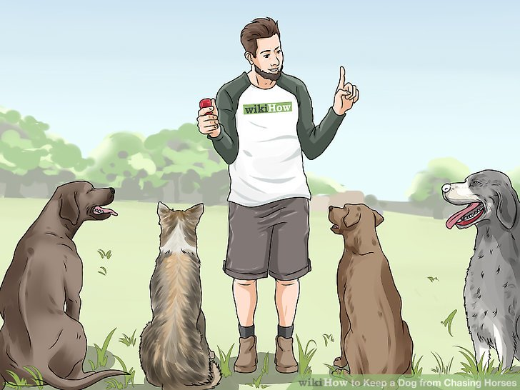 Beauftrage einen professionellen Hundetrainer.
