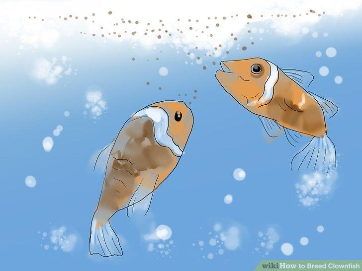 Beobachten Sie, wie sich Ihre Jungfische in Jungfisch verwandelt.