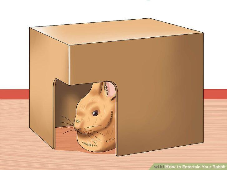 Geben Sie Ihrem Kaninchen Platz zum Verstecken.
