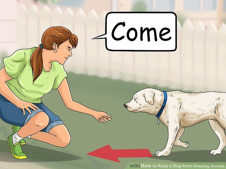 """Bringen Sie Ihrem Hund den Befehl: """"Komm."""