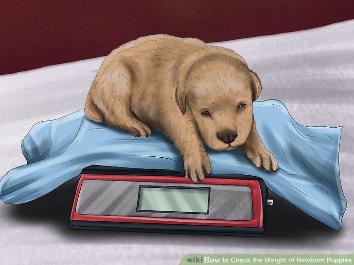 Weigh the puppy.