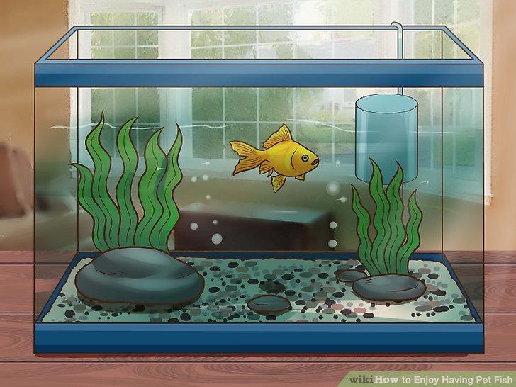 Картинки как ухаживать за рыбками