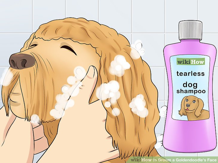 3 Ways To Groom A Goldendoodles Face