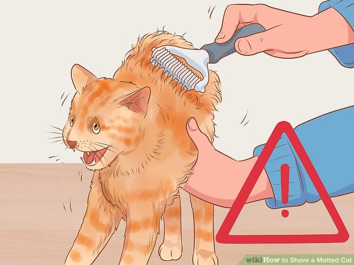 Vermeiden Sie es, an der Haut Ihrer Katze zu ziehen.