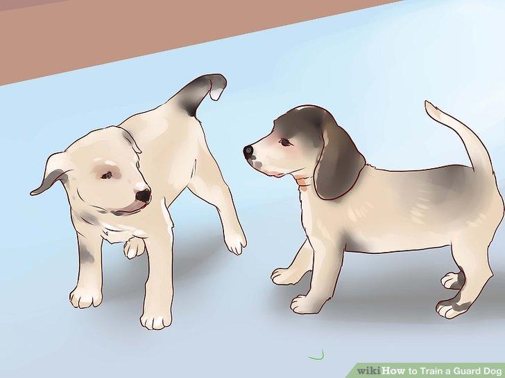 Sozialisieren Sie Ihren Hund als Welpen.
