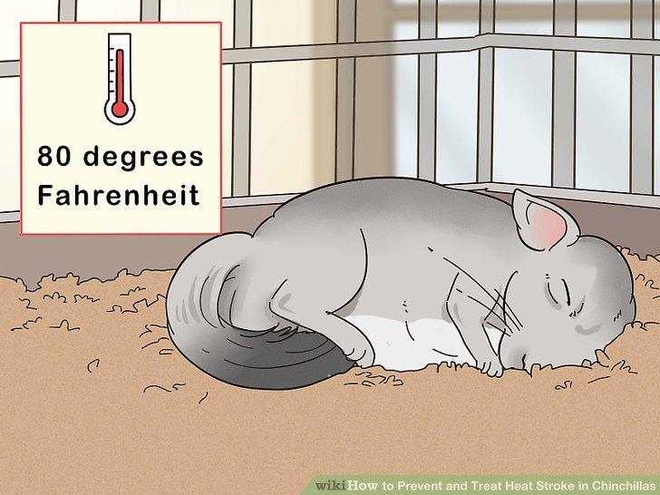 Bewahren Sie Ihre Chinchilla an einem Ort unter 27 ° C auf.