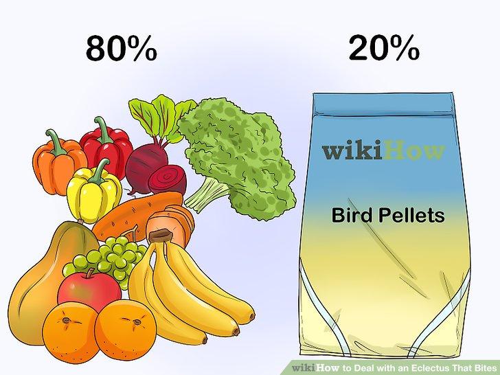 Ändern Sie die Ernährung Ihres Vogels, wenn er Aggressionen verursacht.