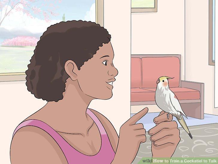 Trainieren Sie den Vogel an einem ruhigen Ort.