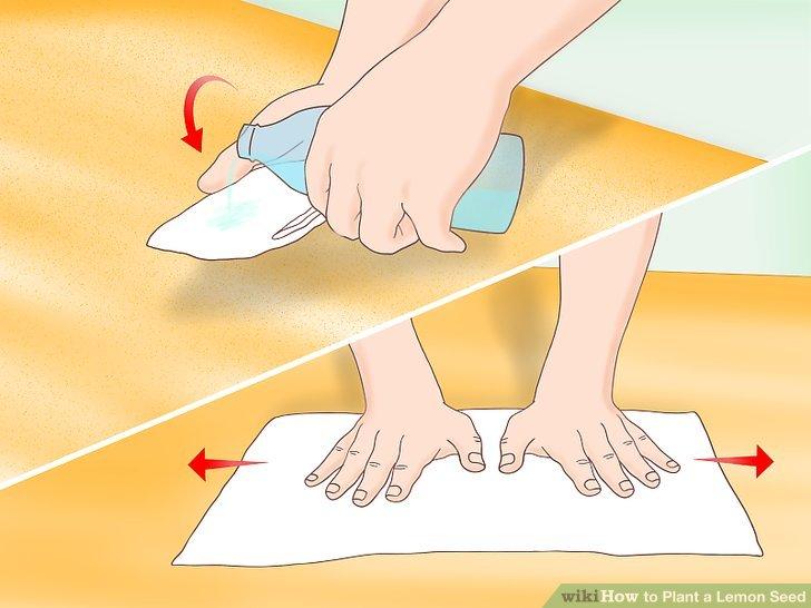 Feuchten Sie ein Papiertuch an und glätten Sie es auf einer ebenen Fläche.