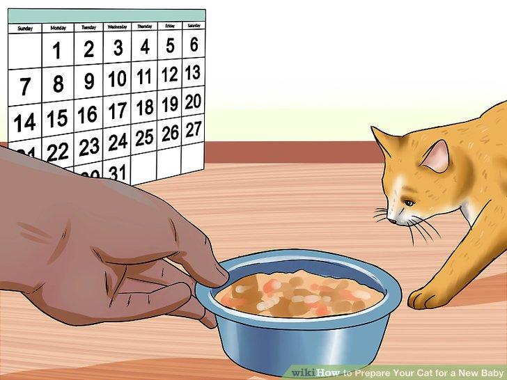 Halten Sie den regelmäßigen Zeitplan Ihrer Katze ein.