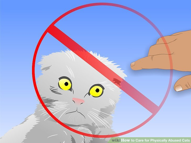 Avoid attempting to make contact with the cat for the first 2 to 3 days.