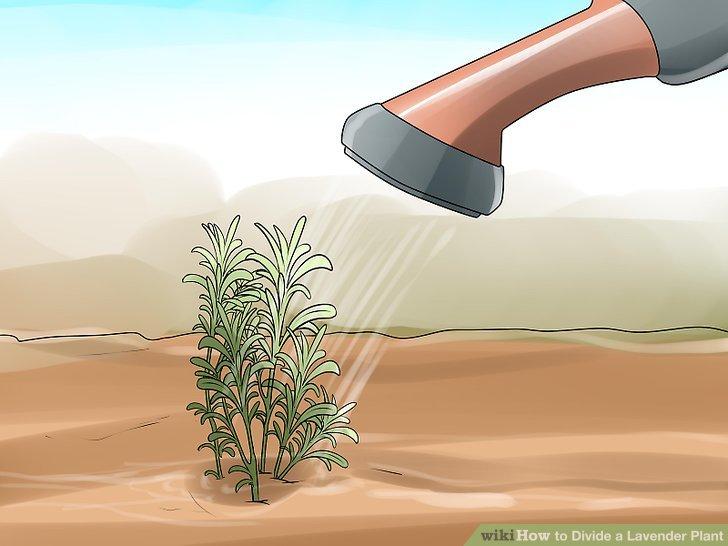 Halten Sie den begrabenen Zweig feucht.