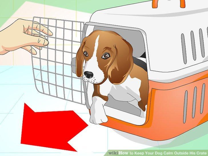 Minimieren Sie die Kistenzeit Ihres Hundes.