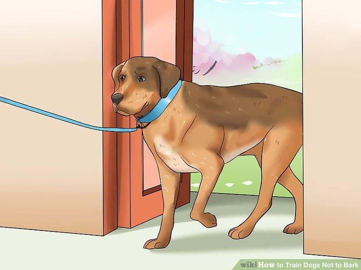 Bringen Sie den Hund mit, wenn das Bellen draußen geschieht.