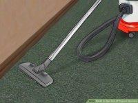 3 Ways to Get Rid of Carpet Beetles - wikiHow
