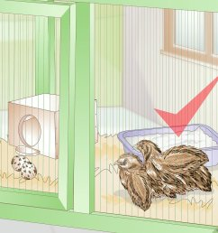 how to care for quail with pictures wikihowsnow quail diagram 17 [ 1200 x 900 Pixel ]