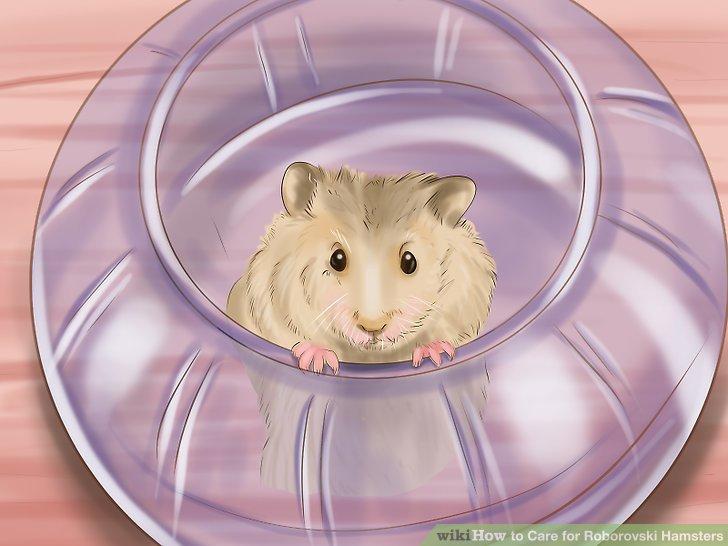 Bitte, deine Hand in die Hamsteranlage zu legen.