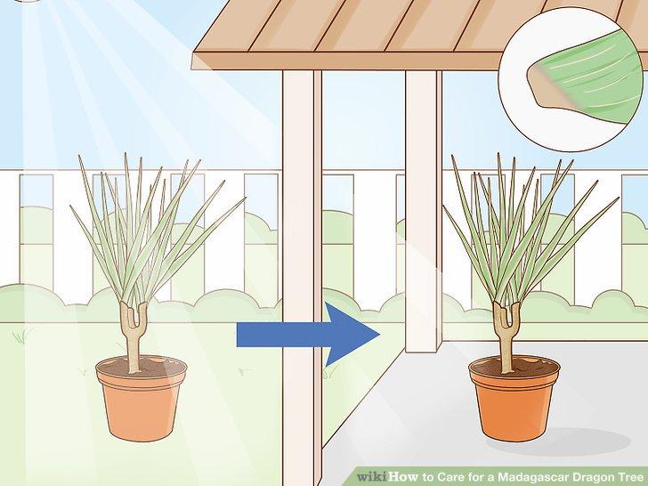 Pflanzen Sie Ihren Baum in einem halbschattigen Bereich.