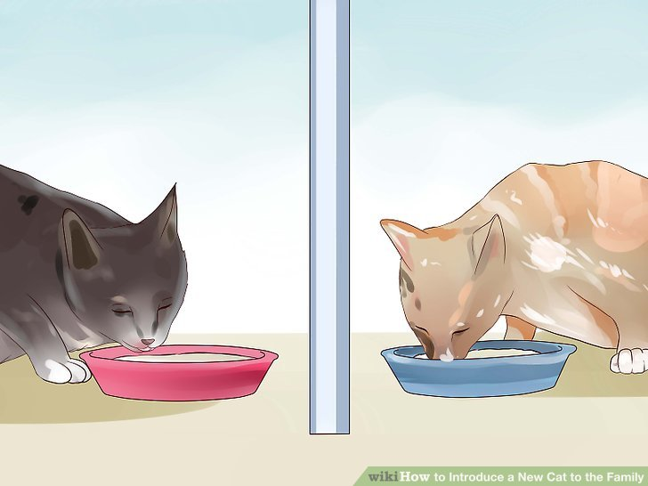 Feed your cats near each other.