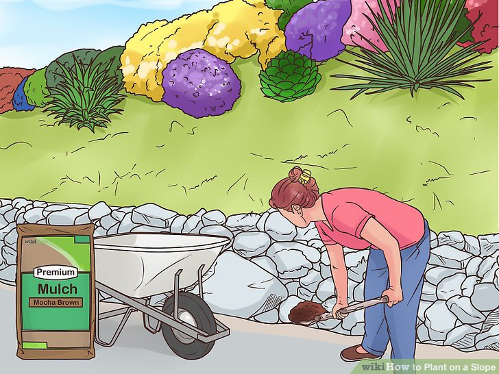 Place mulch at the base of each plant and in between any rocks.