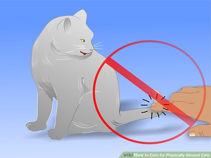 """Avoid touching the cat in """"no-go"""" areas."""