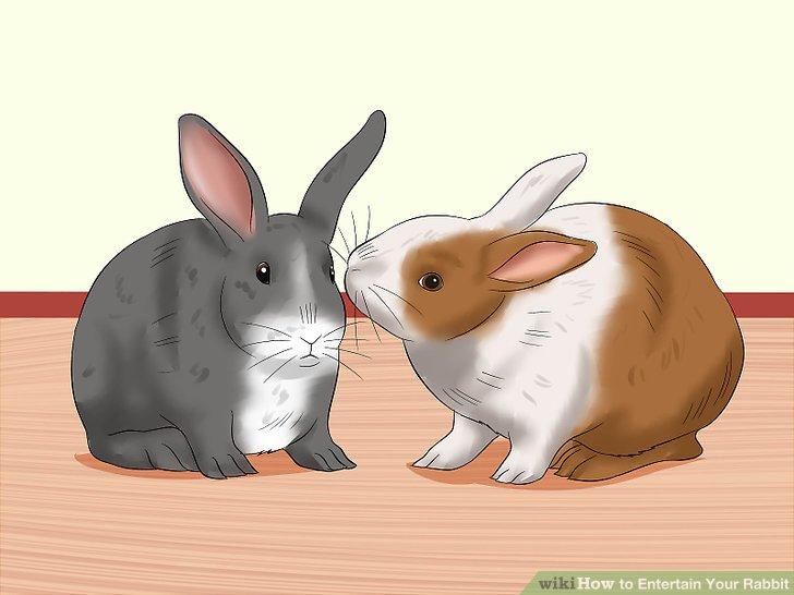 Versuchen Sie Ihrem Kaninchen zu erlauben, seinen eigenen Gefährten zu wählen.