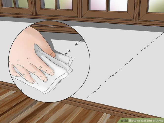 Image Titled Get Rid Of Carpenter Ants Step 1