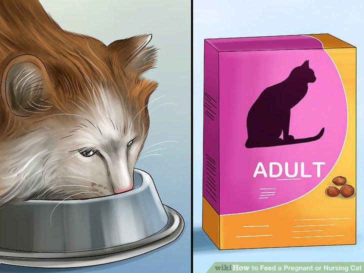 Überführen Sie Ihre Katze wieder in ausgewachsenes Futter, sobald die Kätzchen entwöhnt sind.