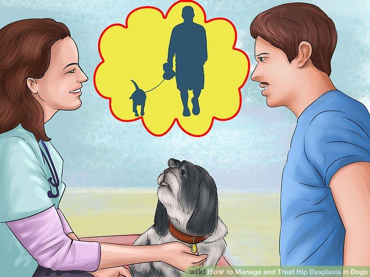 Sprechen Sie mit Ihrem Tierarzt über Bewegung.