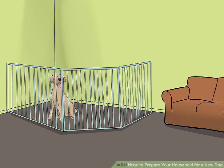 Erarbeiten Sie mit Ihrer Familie einen Hundepflegeplan.