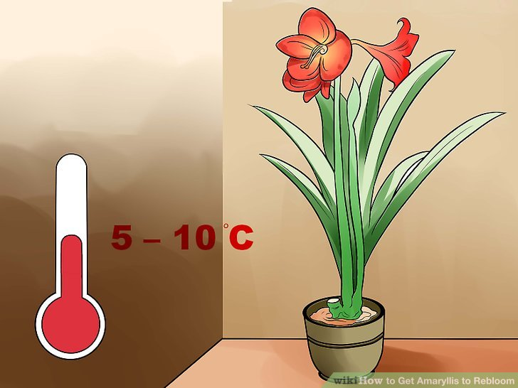 Bring the plant to a cool indoor area.
