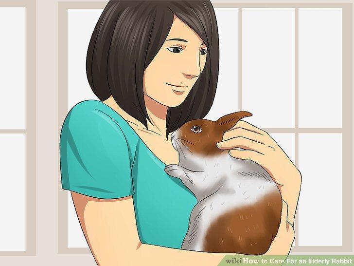 Sorgen Sie für ein gesundes emotionales Leben für Ihr Kaninchen.