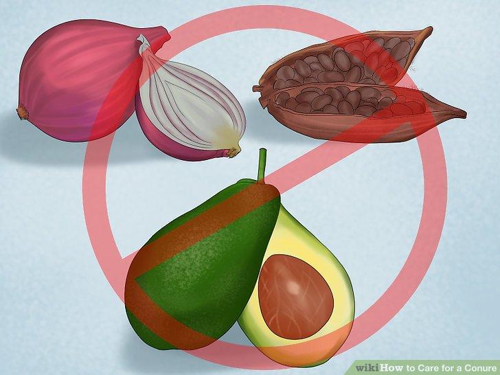 Vermeiden Sie, bestimmte Lebensmittel mit Conure zu füttern.
