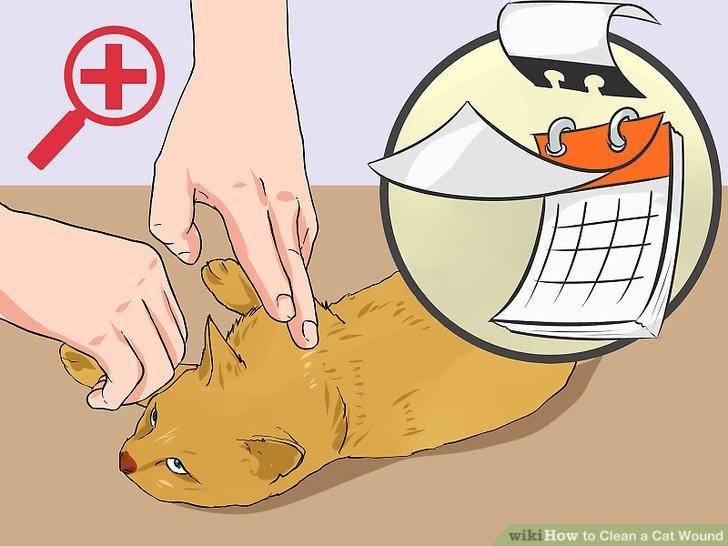 Untersuchen Sie Ihre Katze regelmäßig auf Verletzungen.