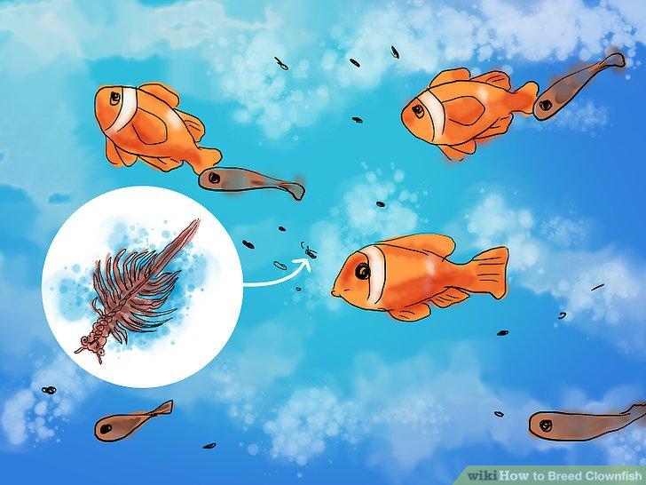 Erwarten Sie, dass ein Teil Ihrer Jungfische es nicht durch den Übergang von einer Fischart zu einem Fisch schafft.