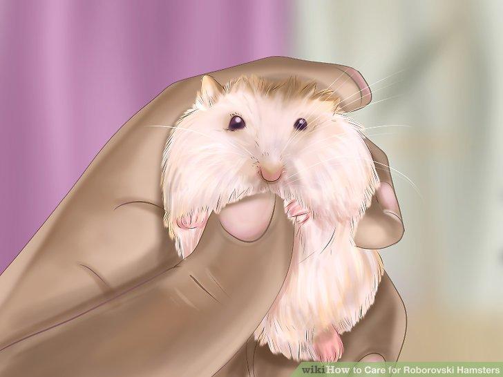 Spiele mit deinem Hamster.