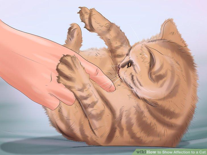 Spiele mit deiner Katze.