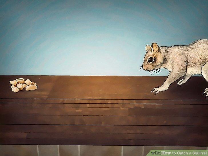 """Versuchen Sie zuerst, die Eichhörnchen zu """"chum""""."""