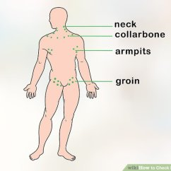 Where Are My Lymph Nodes Diagram Hpm Batten Holder Wiring How To Check 12 Steps With Pictures Wikihow Image Titled Step 1