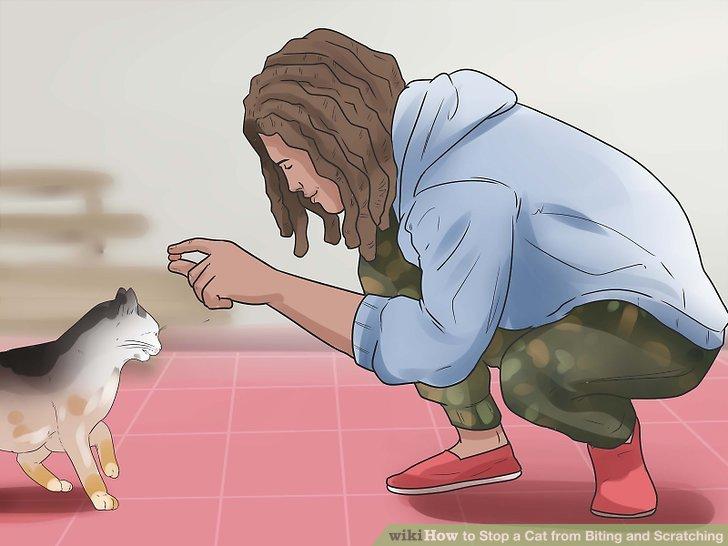 Entscheiden Sie, ob die Katze einfach zu verspielt ist.