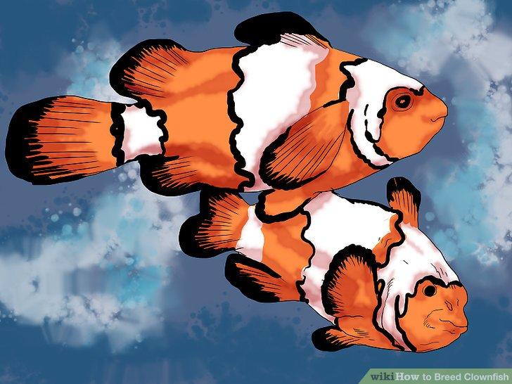 Holen Sie sich ein Paar aus einem Aquariumgeschäft.